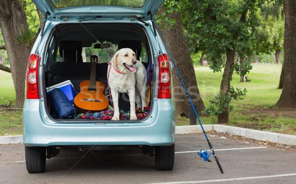 国内の 犬 車 立って ギター 公園 ストックフォト © wavebreak_media