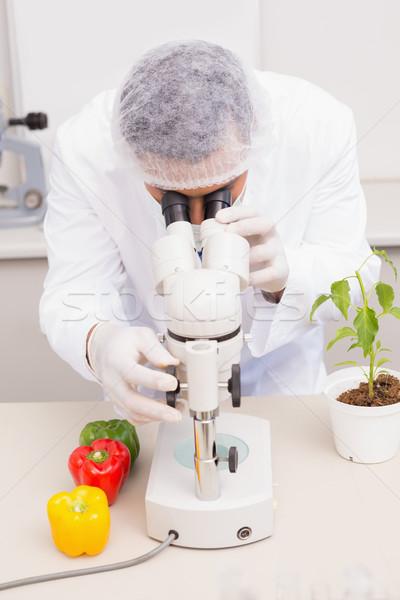 Tudós megvizsgál paprikák mikroszkóp laboratórium technológia Stock fotó © wavebreak_media
