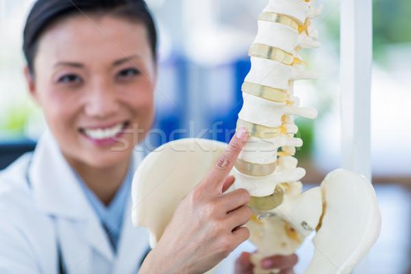 Sonriendo médico anatómico espina médicos Foto stock © wavebreak_media