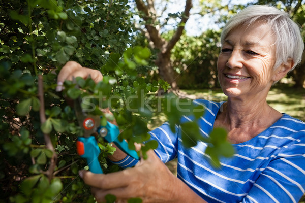 Smiling senior woman trimming plants with pruning shears Stock photo © wavebreak_media
