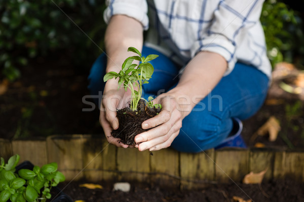 Woman planting young plant into the soil Stock photo © wavebreak_media