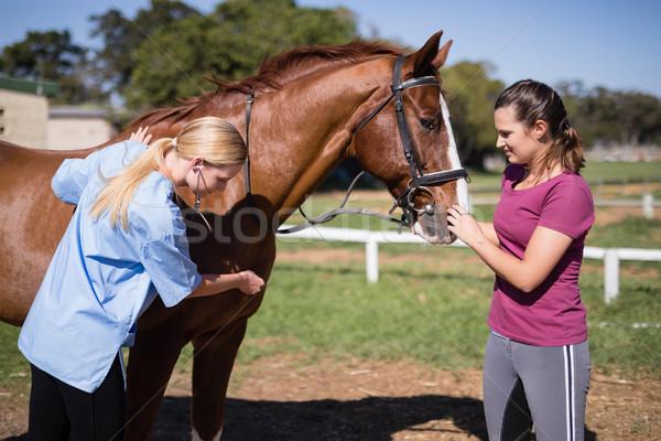 женщины ветеринар женщину лошади Постоянный области Сток-фото © wavebreak_media