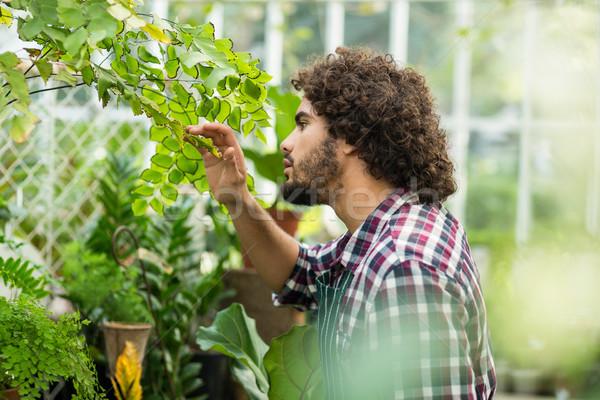 男性 植木屋 植物 温室 側面図 男 ストックフォト © wavebreak_media