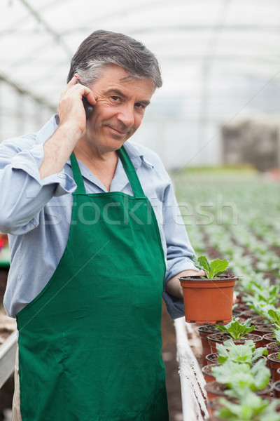 Assistant calling while holding a seedling in greenhouse Stock photo © wavebreak_media