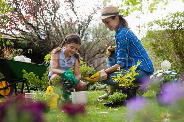 Mãe plântula filha jardinagem sorridente quintal Foto stock © wavebreak_media