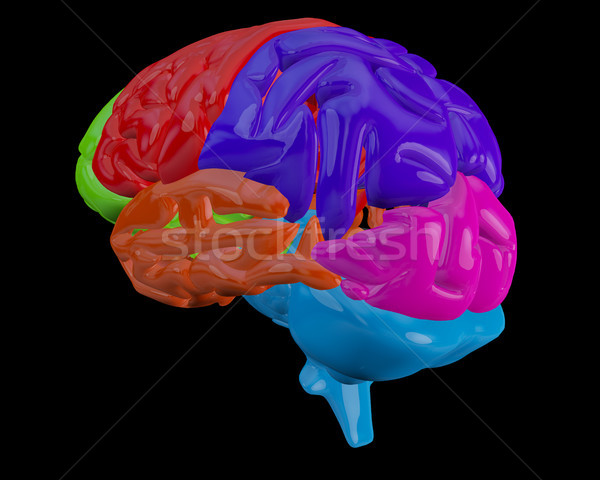Brain with highlighted  sections Stock photo © wavebreak_media