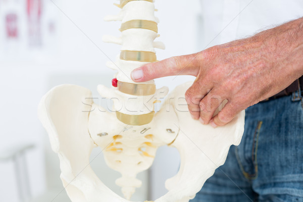 Doktor anatomik omurga klinik adam Stok fotoğraf © wavebreak_media