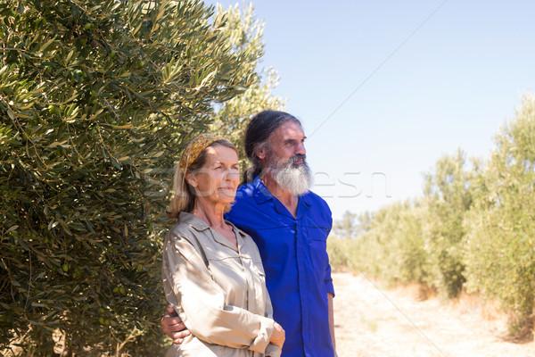 Thoughtful couple standing in olive farm Stock photo © wavebreak_media