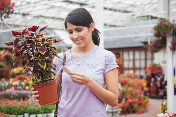 Kadın bakıyor ad bitki bahçe Stok fotoğraf © wavebreak_media