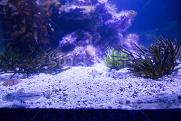 Siyah deniz tank akvaryum doğa Stok fotoğraf © wavebreak_media
