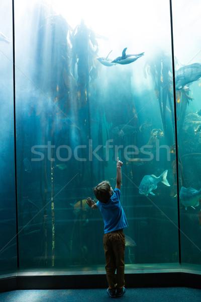 Moço indicação pinguim dedo aquário peixe Foto stock © wavebreak_media