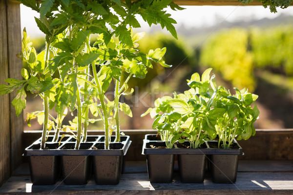 Pot bitkiler tablo bağ iş Stok fotoğraf © wavebreak_media