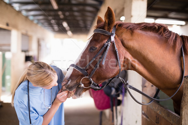 Femenino veterinario caballo dientes pie estable Foto stock © wavebreak_media