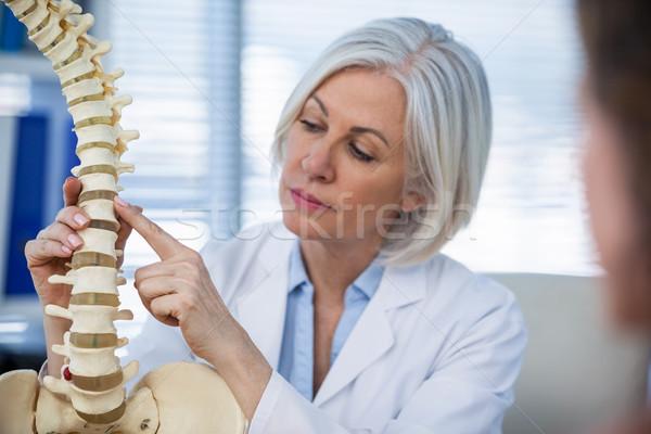 Médecin anatomique colonne vertébrale patient médicaux Photo stock © wavebreak_media