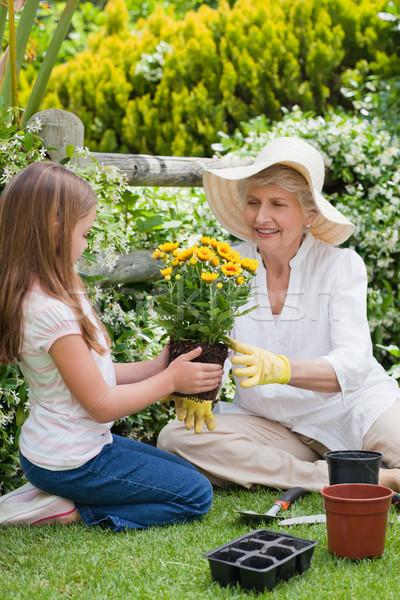 Grandmother with her granddaughter working in the garden Stock photo © wavebreak_media