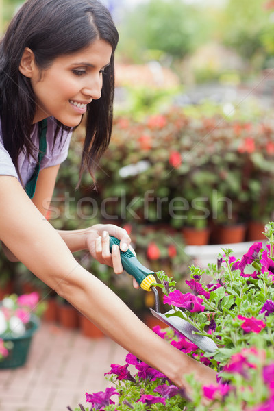 Garden center worker tending to plants with spade Stock photo © wavebreak_media