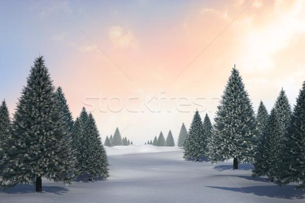 Paysage sapin arbres généré forêt Photo stock © wavebreak_media