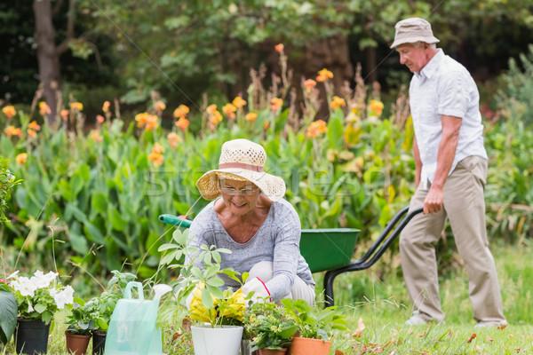 Happy grandmother and grandfather gardening Stock photo © wavebreak_media