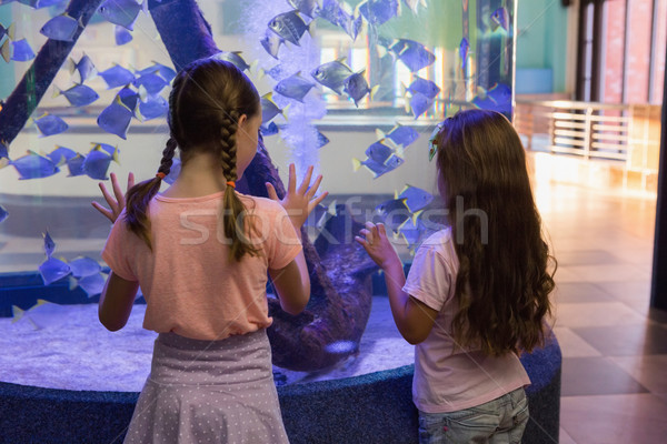 Cute children looking at fish tank Stock photo © wavebreak_media