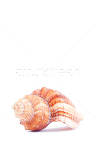 Uno lato mollusco bianco sabbia suono Foto d'archivio © wavebreak_media