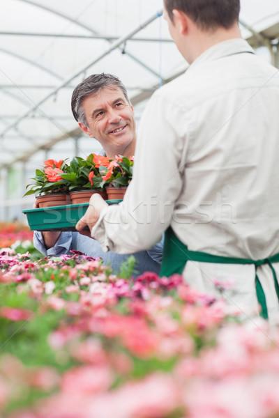 Człowiek pola roślin patrząc pracownika Zdjęcia stock © wavebreak_media