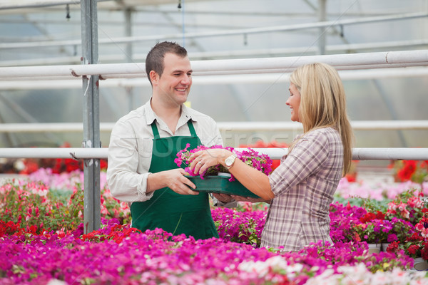Employee in garden center giving woman tray of flowers in greenhouse Stock photo © wavebreak_media