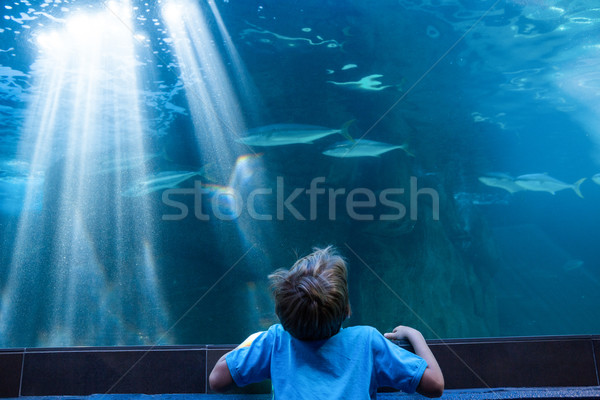 Moço olhando peixe tanque aquário criança Foto stock © wavebreak_media