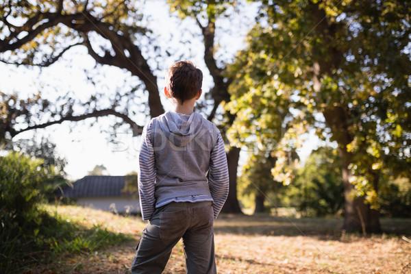 Rear view of little boy standing in forest Stock photo © wavebreak_media