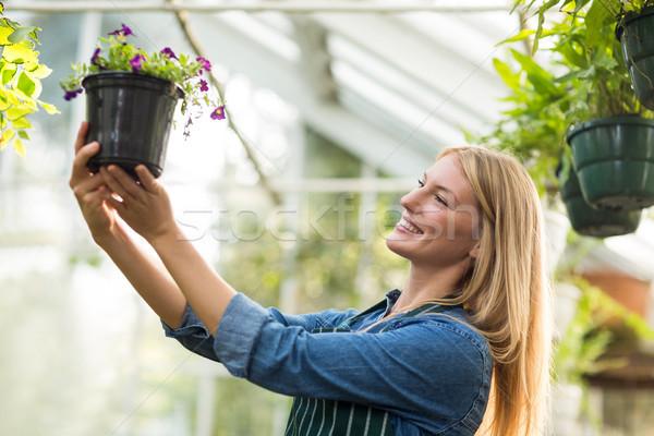 Jonge vrouwelijke tuinman naar bloei plant Stockfoto © wavebreak_media