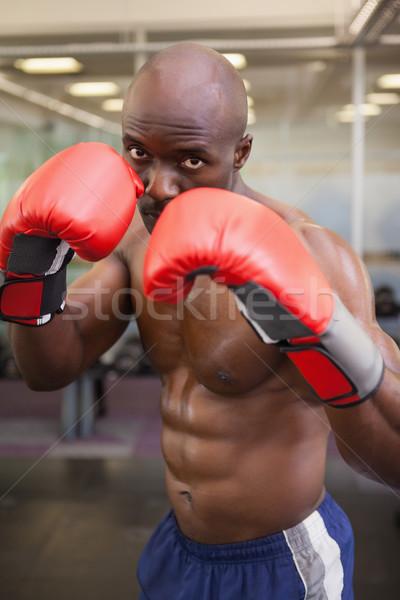 Musculaire boxeur portrait torse nu santé Photo stock © wavebreak_media