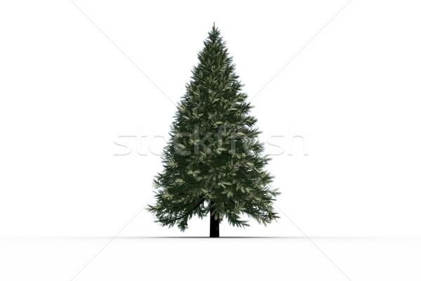 Digitally generated green fir tree Stock photo © wavebreak_media