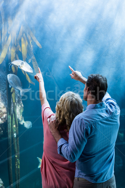 着用 表示 カップル ポインティング 魚 タンク ストックフォト © wavebreak_media