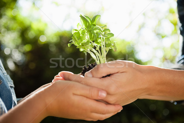 Mother giving seedling to daughter Stock photo © wavebreak_media