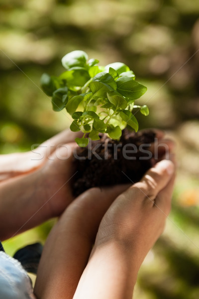 Mère fille semis mains image Photo stock © wavebreak_media