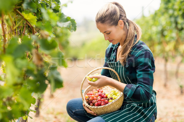 Female vintner holding a basket of grapes Stock photo © wavebreak_media