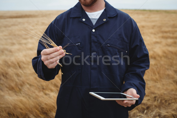 Сток-фото: фермер · ушки · пшеницы · цифровой · таблетка · области
