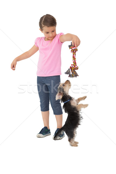 Cute yorkshire terrier puppy playing with little girl holding ch Stock photo © wavebreak_media