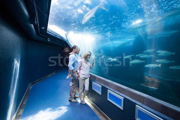 Bakıyor balık tank akvaryum sevmek adam Stok fotoğraf © wavebreak_media