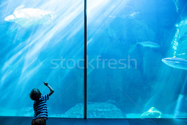 молодым человеком глядя морем черепахи плаванию аквариум Сток-фото © wavebreak_media