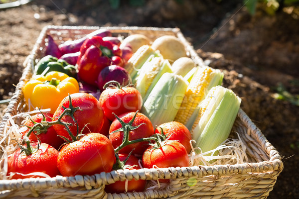 Fresh vegetables in wicker basket Stock photo © wavebreak_media