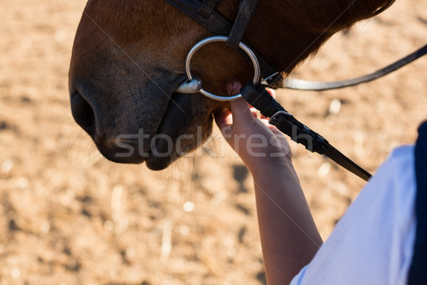 Hand caressing white horses mouth Stock photo © wavebreak_media