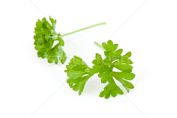 Two chervil sprigs against a white background Stock photo © wavebreak_media
