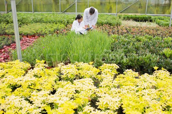 二人 ラボ 植物 温室 手 庭園 ストックフォト © wavebreak_media