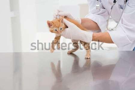 Owner stroking his cute kitten  Stock photo © wavebreak_media