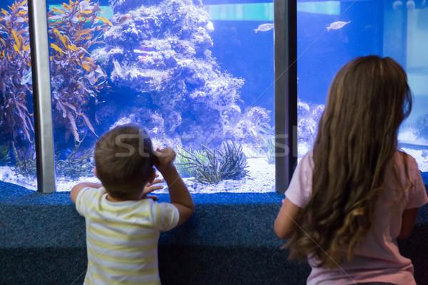 Bonitinho crianças olhando peixe tanque aquário Foto stock © wavebreak_media