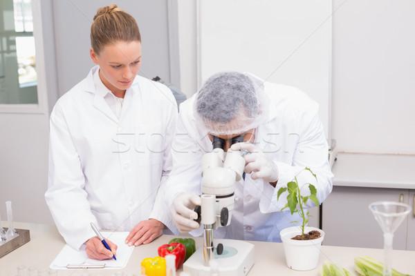Wetenschapper onderzoeken paprika microscoop collega schrijven Stockfoto © wavebreak_media