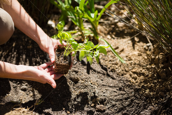 Mid section of woman planting sapling in garden Stock photo © wavebreak_media