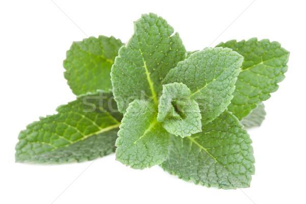 мята веточка белый лист зеленый Сток-фото © wavebreak_media