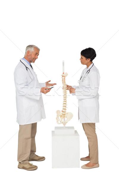 Two doctors discussing besides skeleton model Stock photo © wavebreak_media