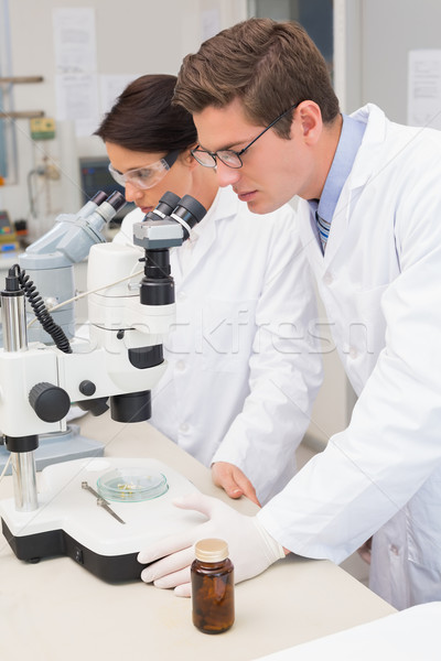 Scientists looking attentively in microscopes Stock photo © wavebreak_media